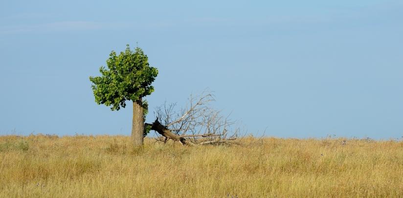 Ett träd som inte gav upp